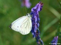 Pflanzenschutztipp vom 3. Juni 2020