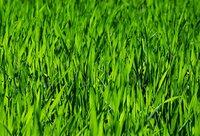 Pflanzenschutztipp vom 15. September 2020